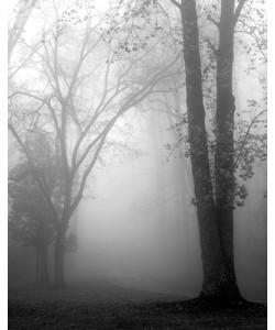 Nicholas Bell, November Fog