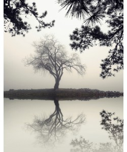 Nicholas Bell, Winter Willow
