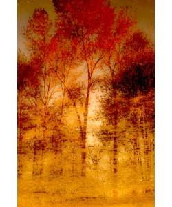 Norm Stelfox, Autumnal Grunge