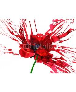 okalinichenko, poppy flower