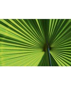 Ortwin Klipp, Leaf 1