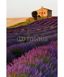 PHB.cz, chapel with lavender and grain fields, Plateau de Valensole, Pro