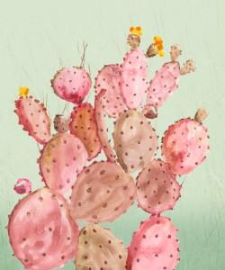 Aimee Wilson, Pink Cacti