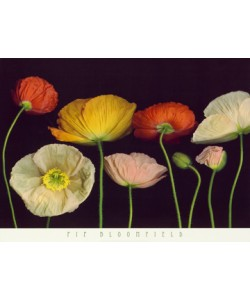 Pip Bloomfield, Poppy Garden I