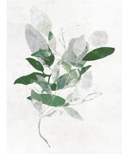 PI Studio, Emerald Botanics I