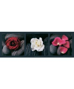 Laurent Pinsard, Roses on stones