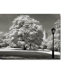 Ralf Uicker, Central Park Tree