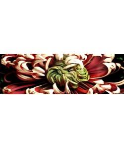 Roberto Scaroni, Chrysanthemus 2