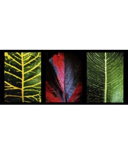 Roberto Scaroni, Three Leaves
