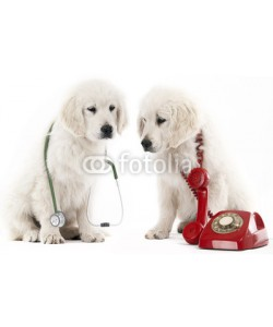 rugercm, calling the vet