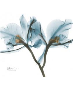 Leinwandbild, Albert Koetsier, Orchids in Blue