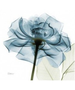 Leinwandbild, Albert Koetsier, Blaue Rose