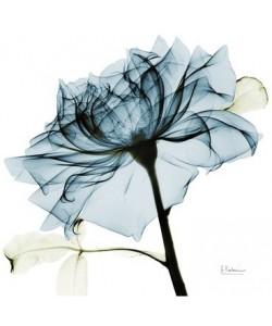 Leinwandbild, Albert Koetsier, Blue Rose 2