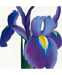 Stephanie Andrew, Iris