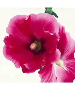 Stephanie Andrew, Pink Hollyhock I