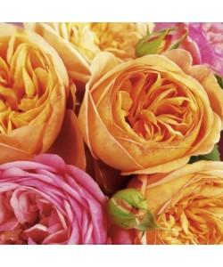 Andrea Tilk, Roses II (Charles Austin)
