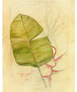 Avery Tillmon, Botanical Journal I