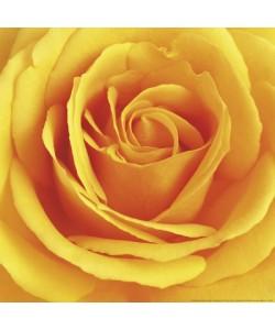 Andrea Tilk, Autumn Dream (yellow)