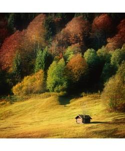 Uwe Steger, Nature Art Color II