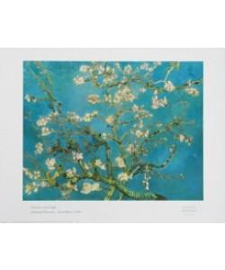 Vincent van Gogh, Mandel-Blüten, Saint Rémy 1890