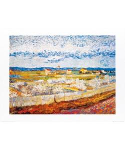 Vincent van Gogh, Pesco in fiore