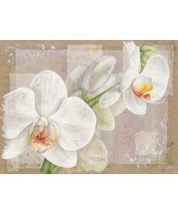 Virginie Cadoret, Orchide