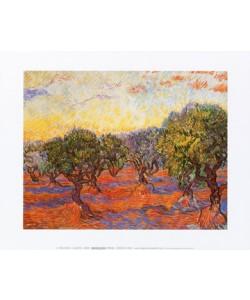 Vincent van Gogh, Uliveto