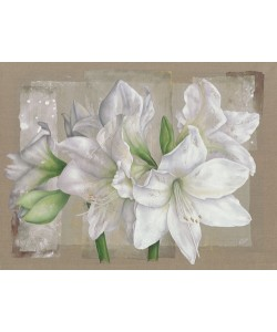 Virginie Cadoret, Amaryllis Blanc