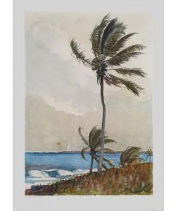 Winslow Homer, Palme, Nassau